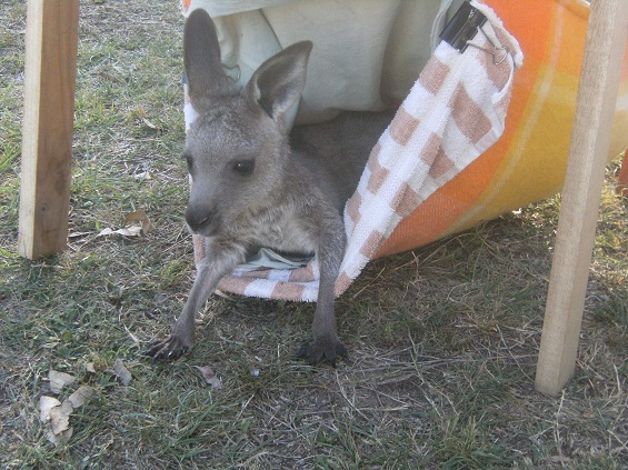 Bozo in his pouch learning about the great outdoors!