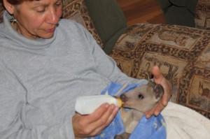 feeding little Bozo
