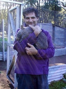 baby sitting a juvenile wombat in 2003