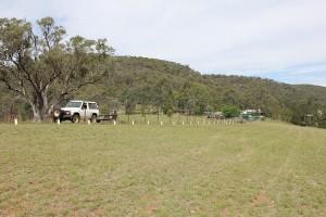 casuarina trees planted along fence line
