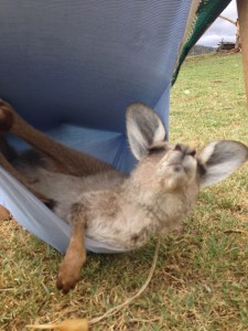 It's a hard life out here in the bush!