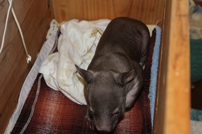 latest photo- Fidel awake and hungry -weight  1245 grams