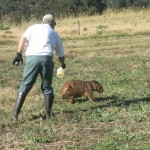 Larry spraying oil onto the poor wombat which does give them some relief .has to be done sparingly as when the animal is run down as this the oil can make it freezing as body temp can't be maintained properly.