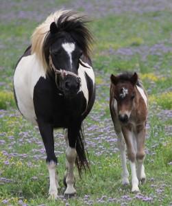 mum Bailey and Tiny