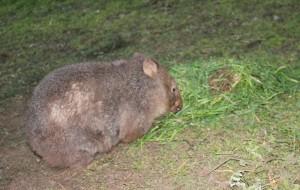 Wynona  - mange patch growing fur