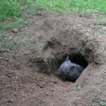 I love my burrow