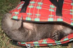 Hey- that's my bag!